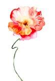 Fleur rose colorée Image libre de droits