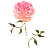 Fleur rose d'aquarelle Photo stock