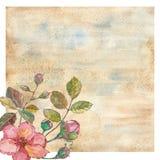 Fleur rose d'aquarelle illustration de vecteur