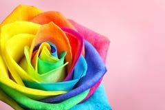 Fleur rose d'arc-en-ciel étonnant Images libres de droits