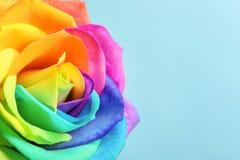 Fleur rose d'arc-en-ciel étonnant Photo libre de droits