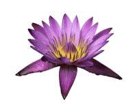 Fleur rose d'isolement et chemin de coupure Photographie stock