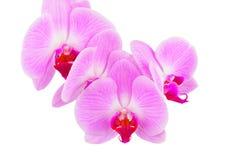 Fleur rose d'orchidée images libres de droits