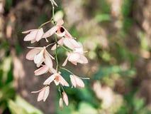 Fleur rose d'orchidée dans le jardin tropical, fond vert pour le courrier images libres de droits