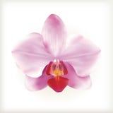Fleur rose d'orchidée, icône Images stock
