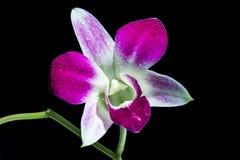 Fleur rose d'orchidée sur des branches photo stock