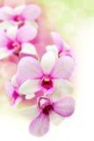 Fleur rose d'orchidées photographie stock libre de droits