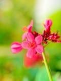Fleur rose dans botanique photos libres de droits