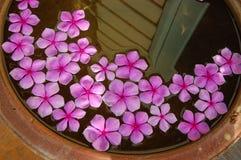 Fleur rose dans l'eau Photographie stock libre de droits