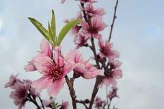Fleur rose dans la nature de vacances photos libres de droits