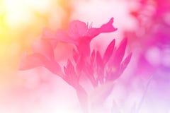 Fleur rose dans le jardin Photographie stock