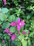 Fleur rose dans mon amour Images stock