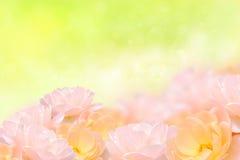 Fleur rose de beau chien sur le fond de tache floue photos libres de droits