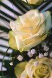 Fleur rose de blanc Signe de l'amour Fleur de jardin d'été Image stock