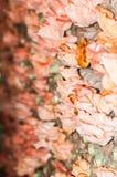 Fleur rose de champignon Photos libres de droits