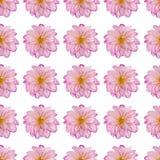 Fleur rose de dahlia dans une configuration répétée Photos libres de droits