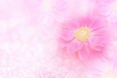 Fleur rose de dahlia sur le fond mou de bokeh et de scintillement avec l'espace de copie Photographie stock libre de droits