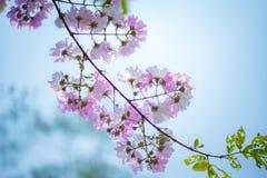 Fleur rose de fleur dans le jardin Images stock