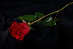 Fleur rose de fleur de rouge sur le noir Image libre de droits