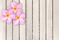 Fleur rose de frangipani sur le fond en bois gris de planche Photographie stock