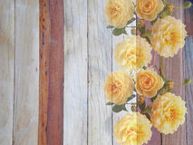 Fleur rose de l'anglais sur en bois Image stock