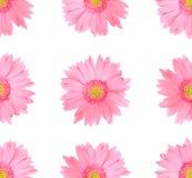 Fleur rose de marguerite de gerbera d'isolement sur le fond blanc photo stock