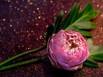 Fleur rose de nénuphar ou de lotus pliant le style thaïlandais avec le boke rouge Photo libre de droits