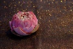Fleur rose de nénuphar ou de lotus pliant le style thaïlandais avec le boke rouge Photos stock