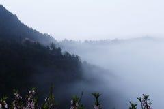 Fleur rose de pêche au printemps sur le flanc de coteau, couverture de brouillard de montagne Photos stock