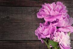 Fleur rose de pivoine sur le fond en bois rustique foncé avec la station thermale de copie Photo stock