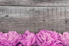Fleur rose de pivoine sur le fond en bois rustique foncé avec la station thermale de copie Photos libres de droits