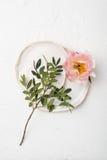 Fleur rose de pivoine sur le fond texturisé blanc Image stock