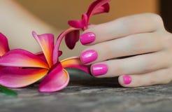 Fleur rose de plumeria dans la main femelle avec beau Photographie stock libre de droits