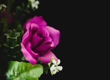 Fleur rose de pourpre Photos stock