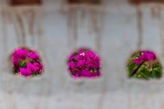 Fleur rose des trous de mur photographie stock libre de droits
