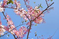 Fleur rose en fleur Photographie stock libre de droits