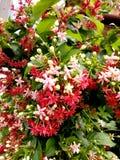 Fleur rose et blanche Photo stock