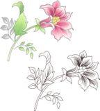 Fleur rose et tracée les grandes lignes, fond floral Photographie stock libre de droits