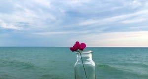 Fleur rose minuscule dans la bouteille par le lac Image libre de droits