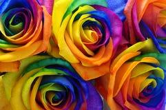 Fleur rose ou heureuse d'arc-en-ciel Photographie stock