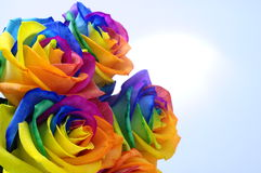 Fleur rose ou heureuse d'arc-en-ciel Image libre de droits