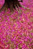 Fleur rose sur la terre Photos stock