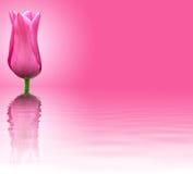 Fleur rose sur le fond rose Images libres de droits