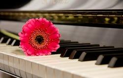 Fleur rose sur le piano photo stock