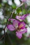 Fleur rose sur un arbre Photographie stock libre de droits