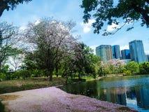 Fleur rose tombant dedans au lac en parc Photos libres de droits