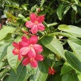 Fleur rouge images libres de droits