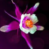 Fleur rouge abstraite Image libre de droits