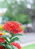Fleur rouge après avoir plu Images stock