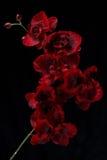 Fleur rouge artificielle sur le fond noir Photo stock